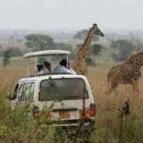 Nairobi National Park Tour (3 Hours)